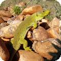 Observatoire Naturaliste des Ecosystèmes Méditerranéens